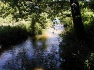 Przyroda okolic J�zefowa