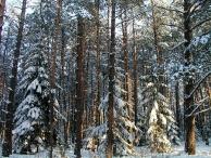 Zima 17