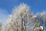 Zima 19